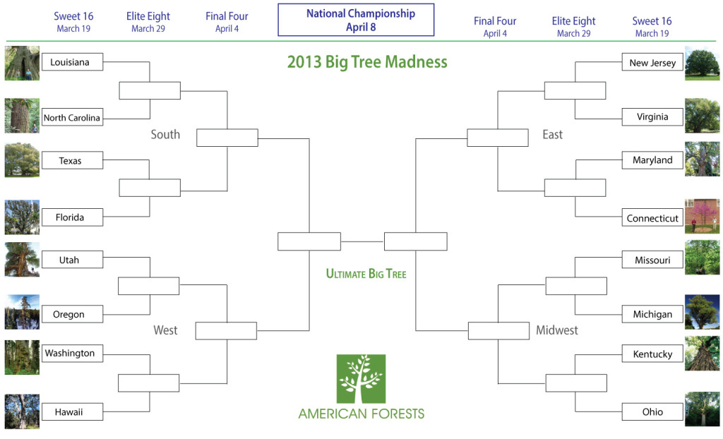 Big Tree Madness bracket