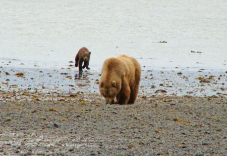 Grizzly sow and cub, Izembek-Becharof National Wildlife Refuges, Alaska
