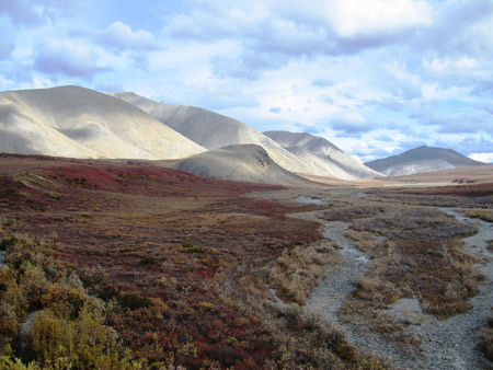 The tundra in Kobuk Valley National Park in Alaska