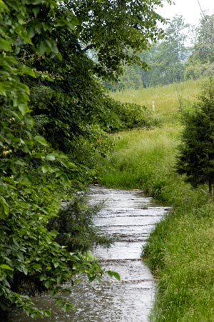 Trees provide a buffer along a stream in Virginia that flows into the Chesapeake Bay. Credit: U.S. Department of Agriculture/Flickr
