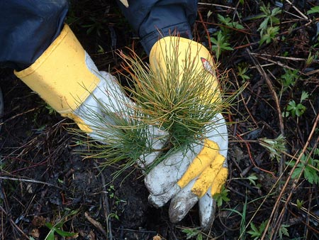 Tree plantings create jobs and effects throughout the economy.