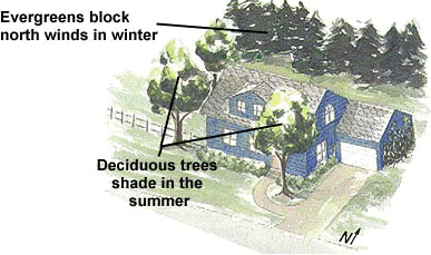 Illustration of how to properly place trees to save energy