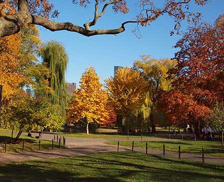 Boston Commons. Credit: Michael Karshis