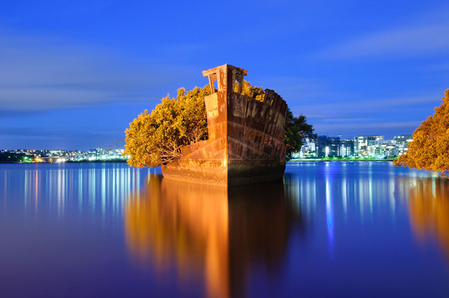Floating mangrove, Homebush Bay, Australia.