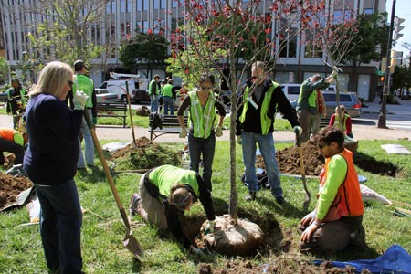 An urban tree planting project