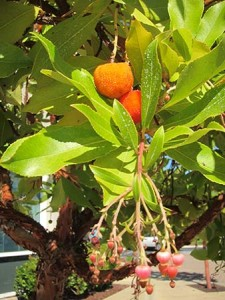 Fruit Tree growing by parking lot. Credit: Lars Plougman