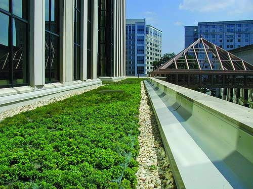 Green roofs like this one are an important type of green infrastructure and part of the urban forest.