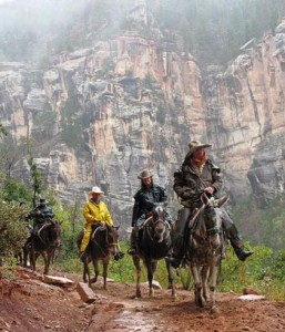 Mule ride at Grand Canyon National Park
