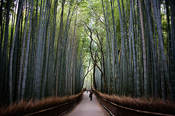 Sagano Bamboo Forest in Arashimaya, Kyoto, Japan