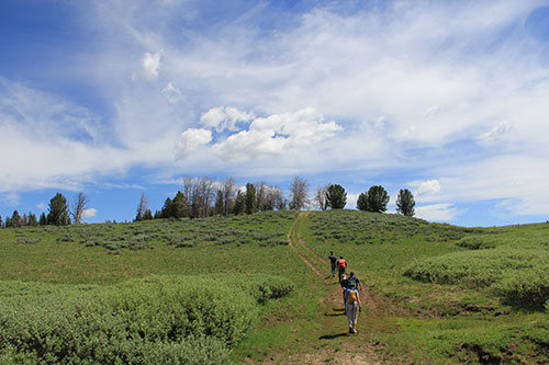 Volunteers hike to one of the sites where they applied phermone pouches to adult whitebark pine.