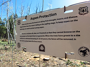 A fence protects young aspen from elk, deer and livestock