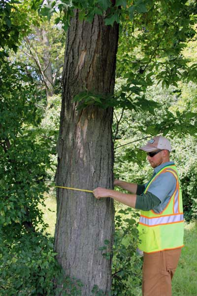 Measuring a tree in River Rouge Park, Detroit, Mich., July 2013