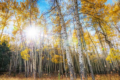 Aspen in Rocky Mountain National Park