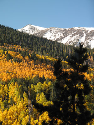 Snowcapped mountains above an aspen stand