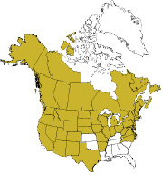 Growing range of quaking aspen in the U.S. Source: USDA Plants Database. Map: Brad Latham