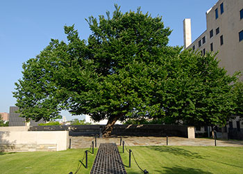 The Oklahoma Survivor Tree