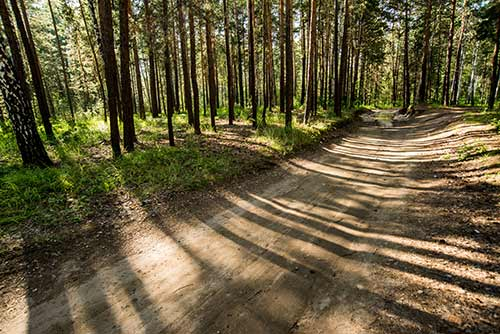 A forest road in Siberia