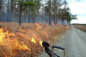 A prescribed burn at Fort A.P. Hill, Va.