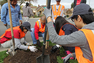 Volunteers put trees in the ground in Pasadena.