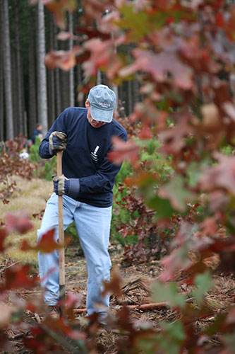 An Alcoa Foundation employee works to restore an area of Muskegon County that has been damaged by insects and disease.