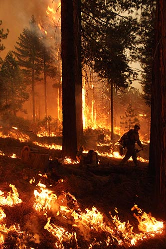 A firefighter combats a dangerous blaze in the Rim Fire in the Stanislaus National Forest