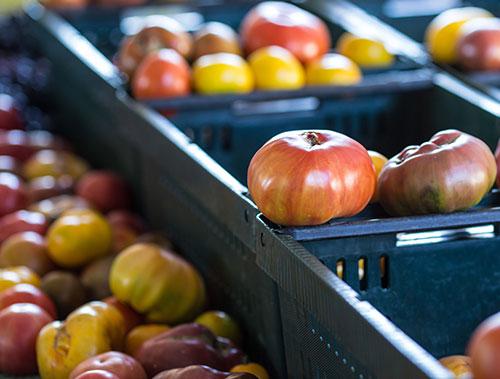 Fresh tomatoes on display at a Sacramento, CA farmers market.