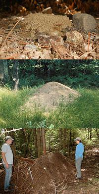 Anthills range in size
