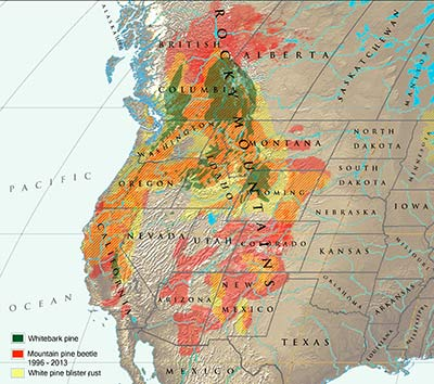 Map of whitebark pine, mountain pine beetle and blister rust