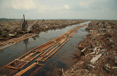 Deforestation from an Indonesian palm oil plantation