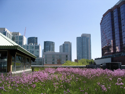 Green Roof in Ontario