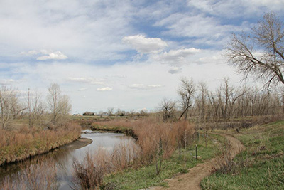 Cottonwoods planted by American Forests and The Park People line the stream at Bluff Lake Nature Center in Denver.