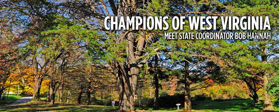 Champion Virginia Pine