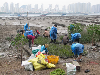 Volunteers plant at Dayu Island in China.