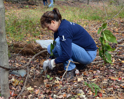 Alcoa volunteer plants seedlings.