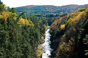 American Forests is helping restore damages to the White River through reforestation.  Photo: Selbe & Lily/Flickr