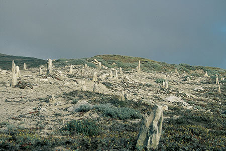 Caliche Forest, the petrified forest of San Miguel Island