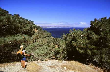 The Torrey pines of Santa Rosa Island are one of only two communities of Torrey pines in the world