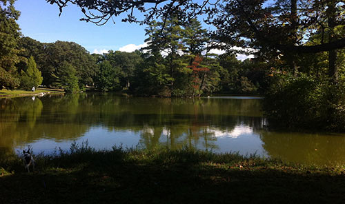 A small dog checks out the shore of Lake Hibiscus in Boston's Forest Hills Cemetery