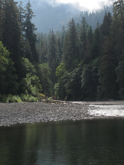 Riparian forests help improve water quality, mitigate erosion and provide wildlife habitat.