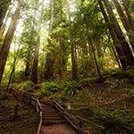Muir Woods 2014 Walkabout