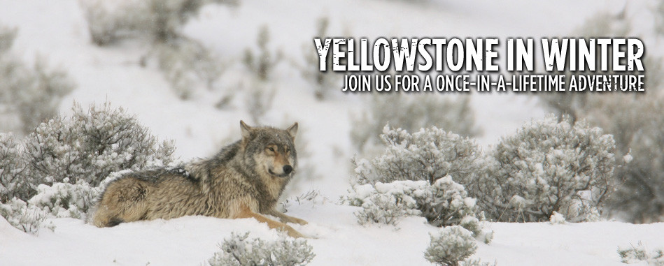 Yellowstone-FS-homepage-slide