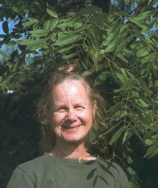 Faith Campbell, Loose Leaf's new guest blogger, has years of expertise in trees and insect pests.