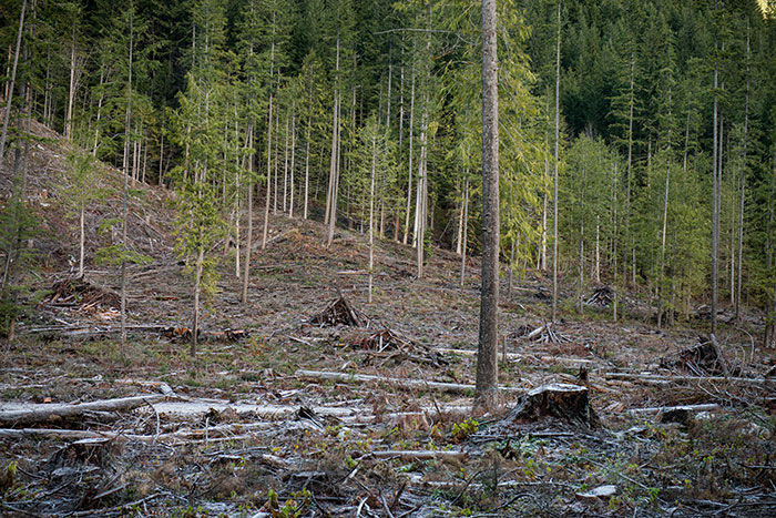 A logged area within northern spotted owl habitat in Chilliwack Lake Provincial Park