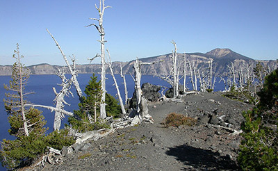 "Ghost trees — ""skeletons"" of whitebark pine"