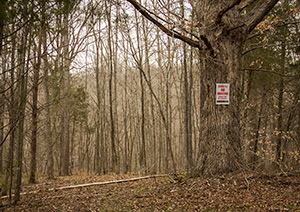 Many animals use the symbolic strength of a forest's largest tree to post messages