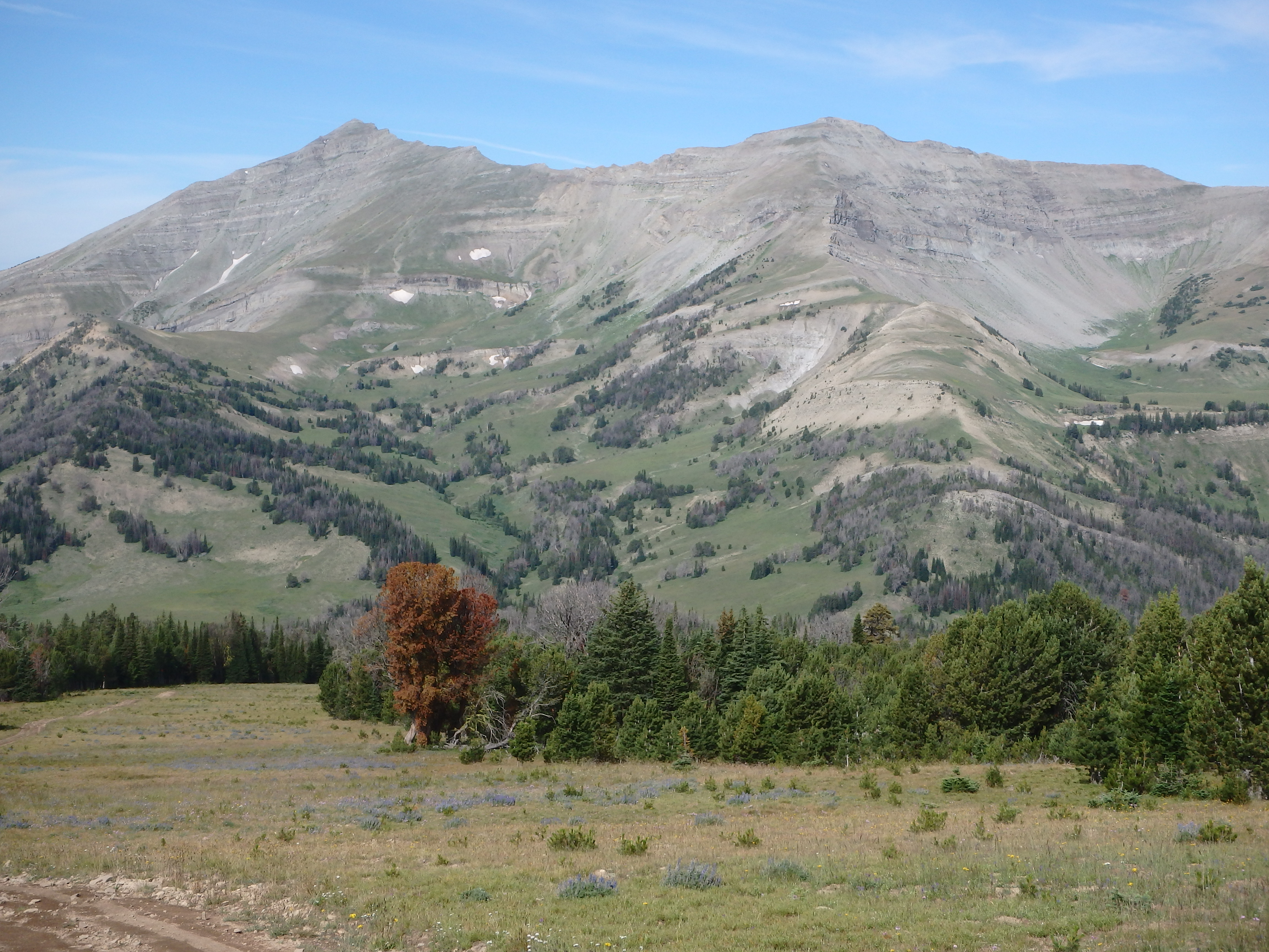 A vista from the Greater Yellowstone Area.