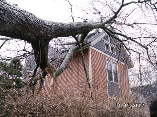 Diseased and dead ash trees — victims of the emerald ash borer — can wreak havoc on communities. Photo credit: Major Hefje, Ann Arbor, Mich.