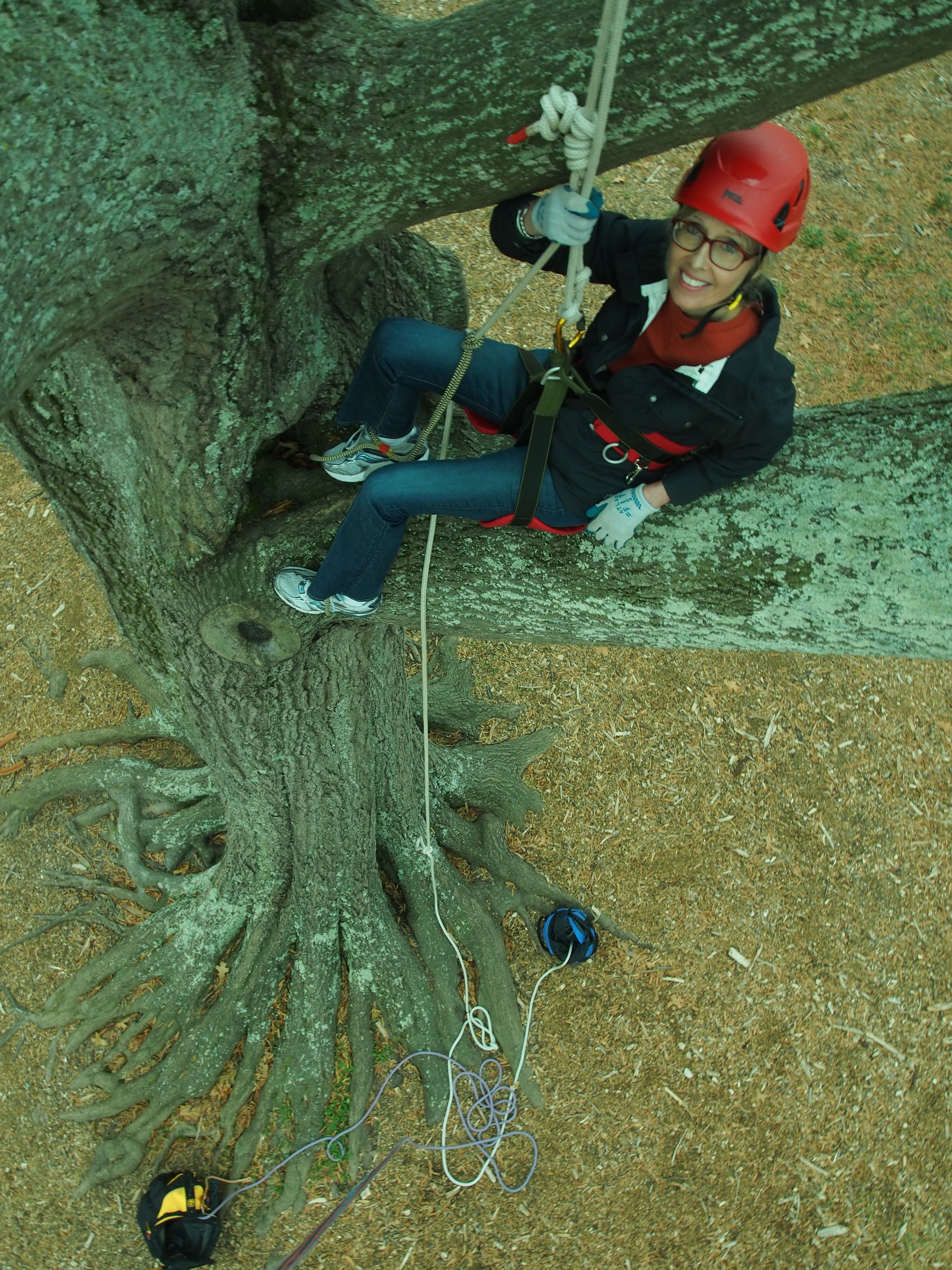 American Forests' VP of Communications, Lea Sloan, about 20 feet up in a tree's canopy.