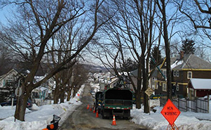 A Worcester, Mass., neighborhood before ALB-infested tree removal