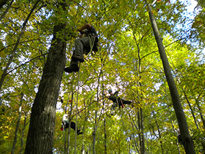 Tree climbers with the Massachusetts Cooperative ALB Eradication Program surveying trees
